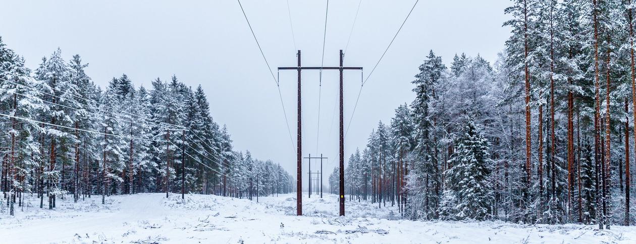 Strømledninger gjennom vinterkledd skog